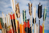 Colourful fletchings