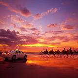 Camel Rides ,Australia...