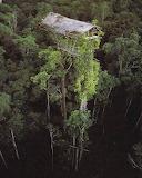 Tree house new guinea