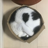 Round Cat in a Square Box