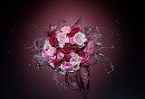 Splash Of Roses