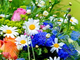 Beautiful-Spring-Flowers-Pictures