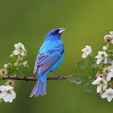 ♥ Blue Bird...