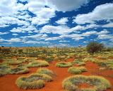 #Old Spinifex Rings- Little Sandy Desert Australia