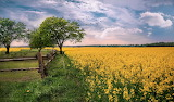 Field, fence, flowers, trees, nature