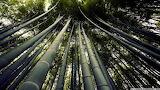 Japanese giant bamboo-wallpaper-1920x1080