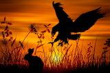 Eagle hunting bunny