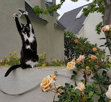 Goal Kitty In The Roses