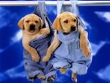#Farmer Pups
