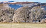 Edston woods, Peebles Scotland