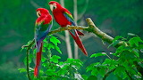 ColourfulParrots