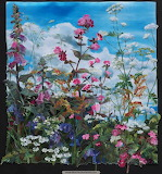 Amanda Richardson cornish-hedge-foxgloves-and-campion