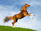 Cool-horse