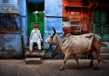 India, cow, street, indian man, sitting, staircase, doors, windo