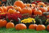 ^ Fall pumpkins and mums