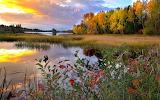 Landscape-autumn-pond-reflection-grass-trees-nature