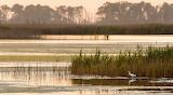 Wetland Morning