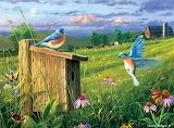 Bluebirds~ Hautman Bros.