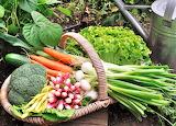 #Backyard Vegetables