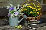 POTW - Gardening, tools, flowers, watering can, basket