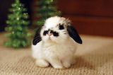 Cute-animal-pics-part13-9
