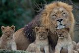 ☺ Family...
