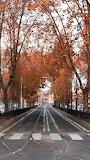 Autumn In Viale Aventino, Roma, Italy