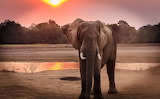 Wildlife-photography-of-elephant-during-golden-hour-1054655