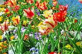 Tulips Closeup 522044 1280x853