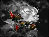 Effet Noir et blanc et couleur