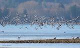 Gulls gulls, and more gulls