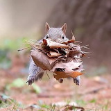 Another snack for Mr. Squirrel