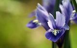 Flower garden plant (327)