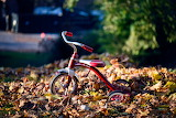 Autumn tricycle