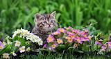 Gatito entre flores