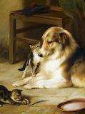 Collie & Kittens