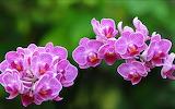 Flower garden plant (362)