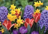 #Flowers by Navroz