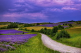 Lavenderfields in Dusk - Photo id-4105630 Pixabay by Photos_kast
