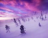 WinterTempest