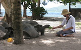 Man, boy, turtle, trees, see, sand, feeding