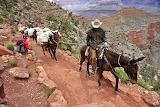 Girl, hicker, horses, cowboy, Mexico