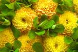 ☺ Yellow beauties...