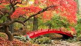 #Autumn Japanese Garden Maple Tree