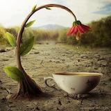 Flower & teacup