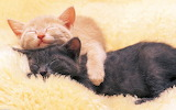 ☺ Sleeping in the arms of love...