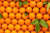 Taronjes - Oranges