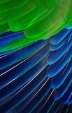 Feathers_David Clode