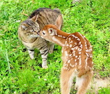 The cat and the fawn