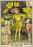 """Fairy Tales"" tumblr enchantedbook Kingcup ""Cicely Mary Barker"""